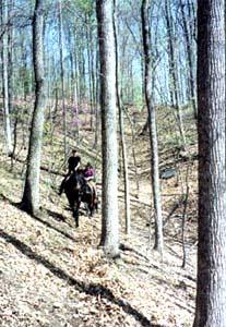 Hardwood Forests Bundoran Belgians
